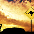 Kangaroo sign caution — Stock Photo