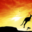 Kangaroos — Stock Photo #19371671