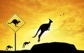 Kangaroo sign caution — Stock Photo