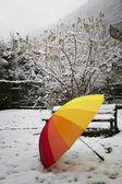 Colored umbrella — Stock Photo