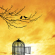 Bird cage — Stock Photo #24014599