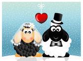 Wedding sheeps — Stock Photo