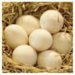 Eggs collage — Stock Photo