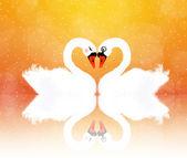 Swans in love — Stock Photo