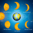 Stock Photo: Moon phases