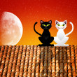 Cats in love on the roof — Stock Photo #25968501