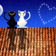 Cats in love on the roof — Stock Photo #25968707
