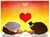 Hedgehogs — Stock Photo