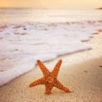 Starfish — Stock Photo #28571791