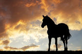 Horse silhouette — Stock Photo