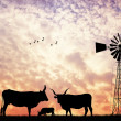 Cows at sunset — Stock Photo
