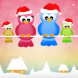 Birds at Christmas — Foto de Stock