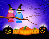 Birds of Halloween — Stockfoto