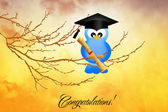Bird graduate — Stock Photo