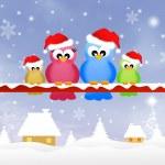Birds family at Christmas — Stock Photo