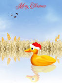 Duck at Christmas — Stock Photo