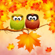 Owls in autumn — Stock Photo