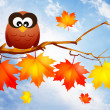 Owl in autumn — Stock Photo