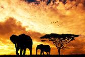 在日落的大象 — 图库照片