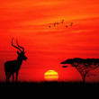 Impala at sunset — Stock Photo