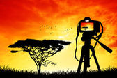 Photograph of an African landscape — Stock Photo