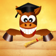 Funny horse graduate — Stock Photo