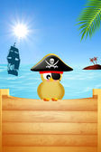Bird pirate — Stock Photo