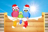 在圣诞节的鸟 — 图库照片