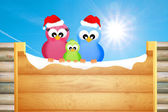 Birds at Christmas — Stock Photo