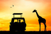 Safari sunset — Stock Photo