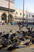 San marco, venecia — Foto de Stock
