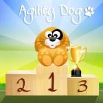 Agility dog — Stock Photo