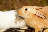 Bunnies — Stockfoto