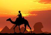 Camel in Egypt — Stock Photo