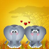 Elephants in love — Stock Photo