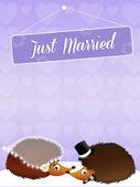 Svatba ježci — Stock fotografie