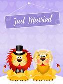 Wedding of lions — Stock Photo
