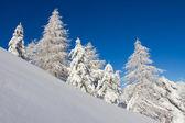 白云岩在冬季 — 图库照片