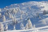 雪盖的树 — 图库照片