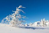 Paganella kayak — Stok fotoğraf