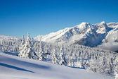 Paganella ski — Zdjęcie stockowe