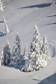 паганелла лыж — Стоковое фото