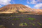Fuerteventura — Stock Photo