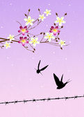 Swallows in spring — Stock Photo