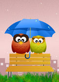 Owls with umbrella — Stock Photo
