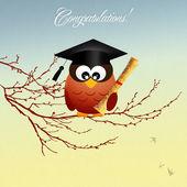 Baykuş mezunu — Stok fotoğraf