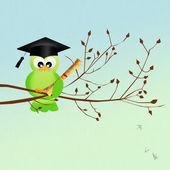 Bird graduate — Stock Photo