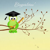 Graduação de pássaro — Foto Stock