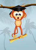 Monkey graduate — Stockfoto