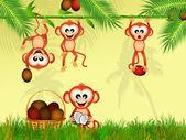Monkeys eat the coconut — Stock Photo